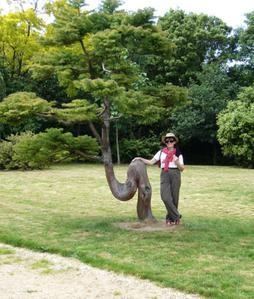 Visite-Les-Jardins-d-Yves---Le-cryptom--ria-et-Mo-----2-06-07-copie-1.jpg
