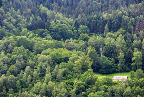 La France et sa forêt !