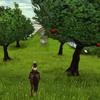 Applegrove,le verger