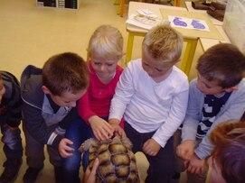 visite d'une tortue