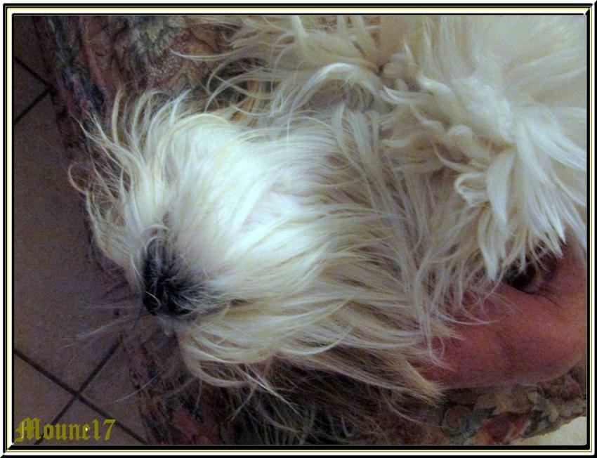 Grosse fatigue chez les poilus