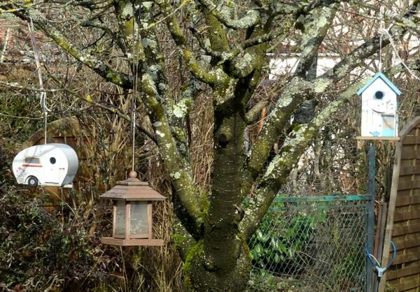Les fiançailles des mésanges de mon jardin !!