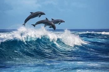 L'homme et le dauphin ...
