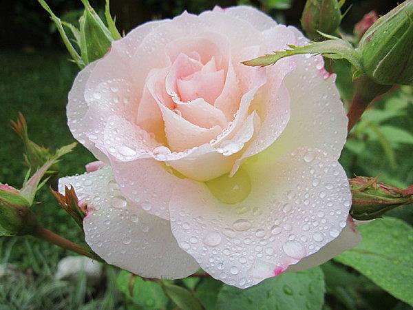printemps-ete-2012 1093