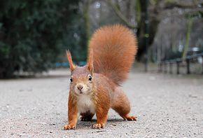 Il est malin notre écureuil ...
