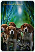 fonds ecran animaux 001 2017