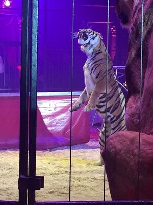 Le cirque Bouglione en Tournée