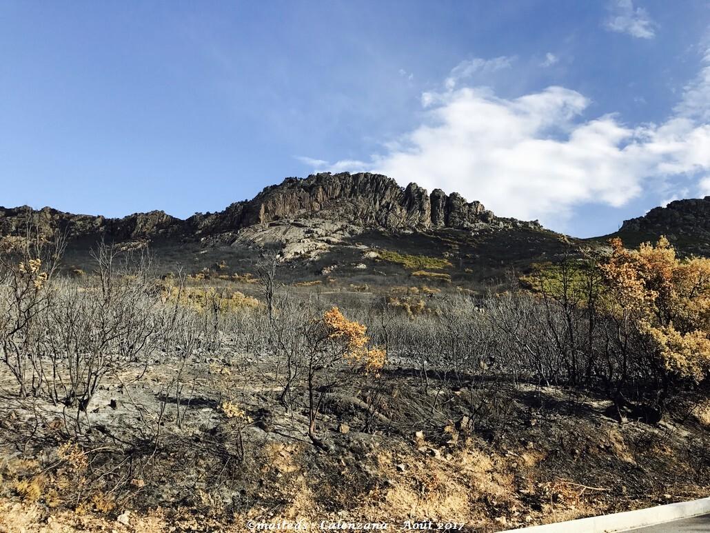 J'ai mal à ma Corse - Après les feux