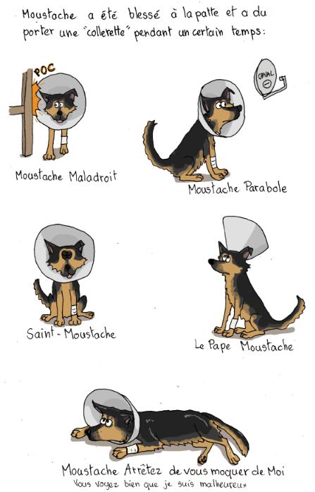 La parabole du chien