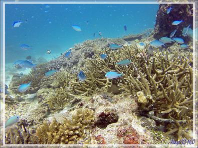 Plongée à partir de la plage sud de Nosy Tsarabanjina - Archipel des Mitsio - Madagascar