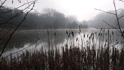 Parcours d'orientation en forêt de Phalempin