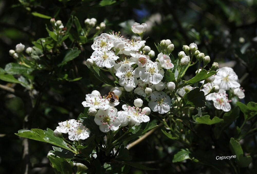 En mode confinement - 13 : le jardin-parfums