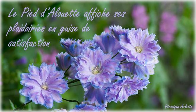Perle fleurie Pied d'Alouette