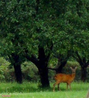 Tendresse Animale un jour dans la forêt