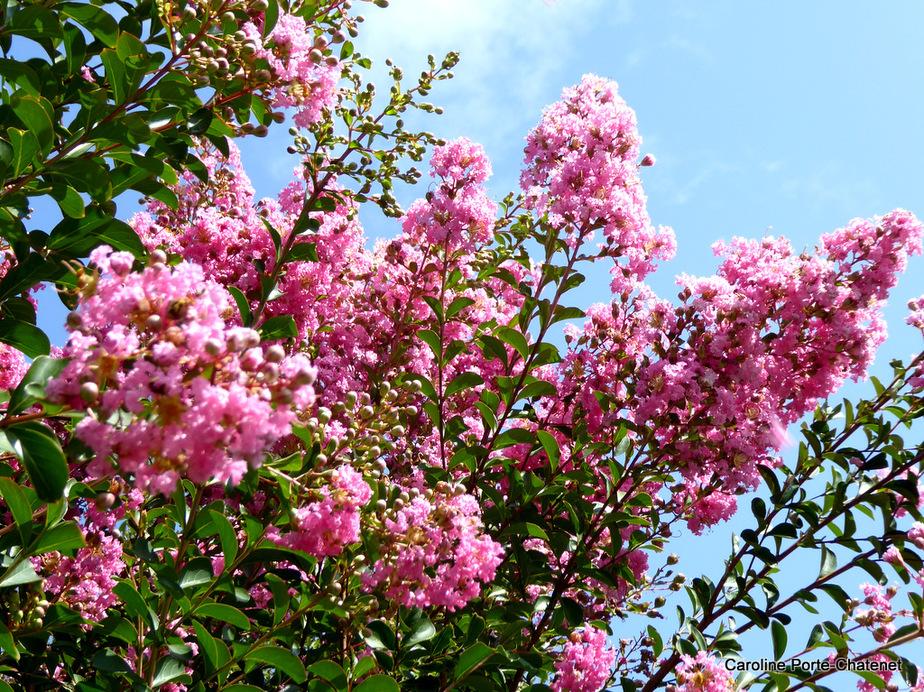 *Août 2019 très fleuri*