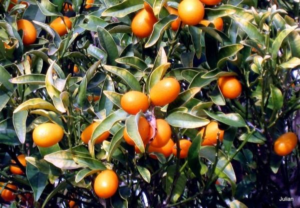 L07 - Les fruits