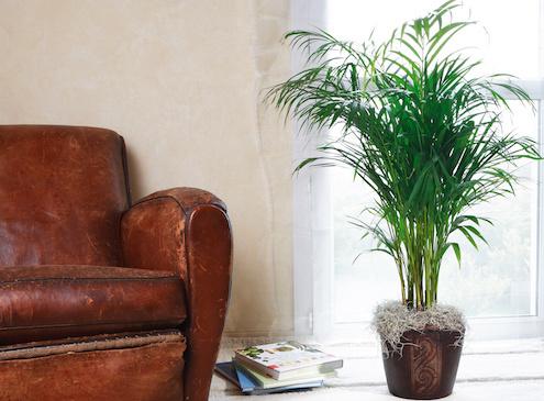 Plante dépolluante dans la maison.