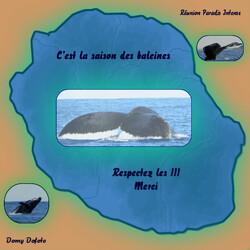 Si vous observez les baleines... n'oubliez pas la charte !