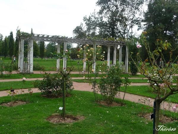 Parc-de-la-Tete-d-Or---Roseraie--24-.JPG
