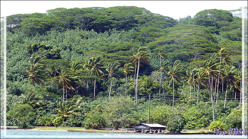 Excursion de la journée vers Tahaa et son lagon - Polynésie française
