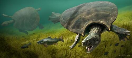 Une tortue préhistorique de la taille d'une voiture