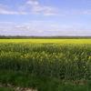 Les champs vers Cernay la Ville