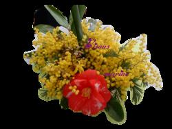 ♥ Fleurs rares ♥