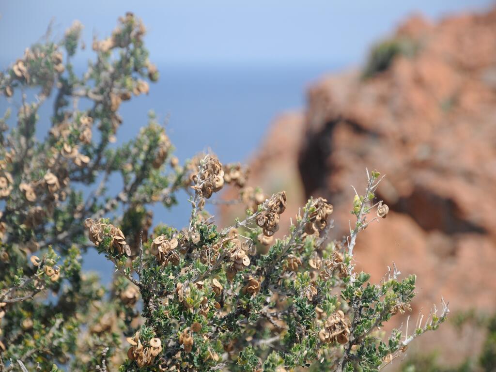 L'Esterel...(8)..la végétation...A suivre