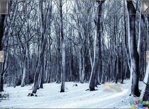 Jouer à Easy escape - Snowland
