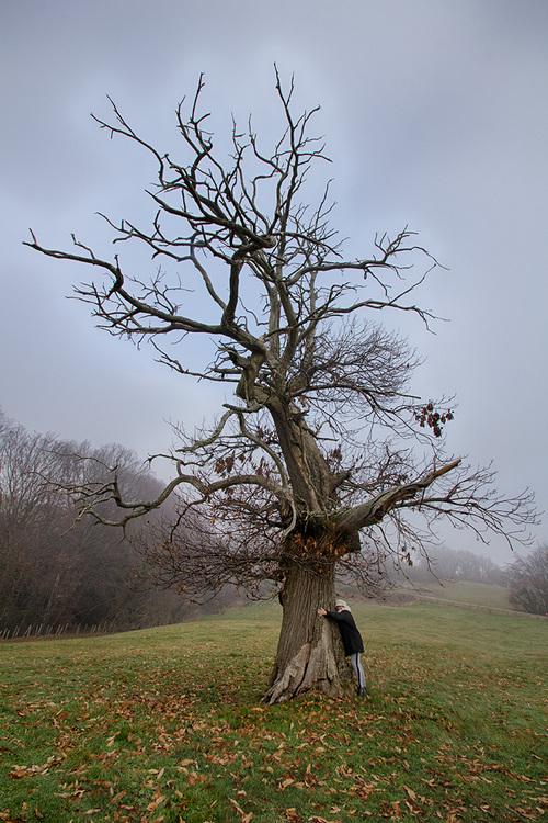 l'arbre aus fées...
