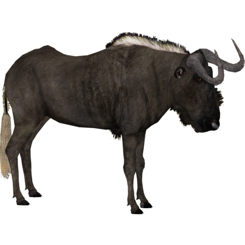 File:Black Wildebeest (DRAGON-unit911).png