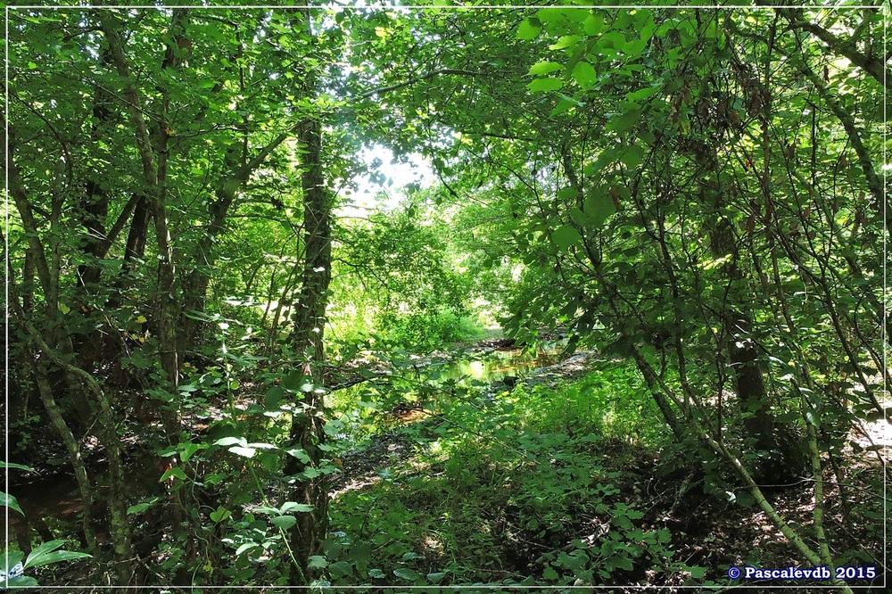 Les étangs de Monsalut - Début Août 2015 - 5/7