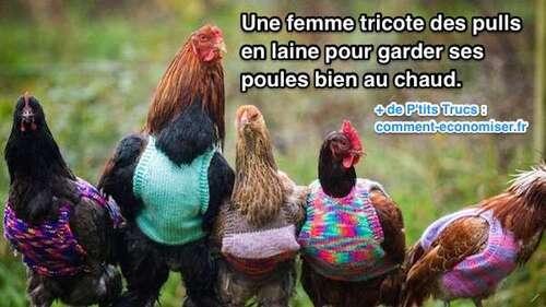 Une Femme Tricote des P'tits Pulls en Laine Pour Garder ses Poules au Chaud.