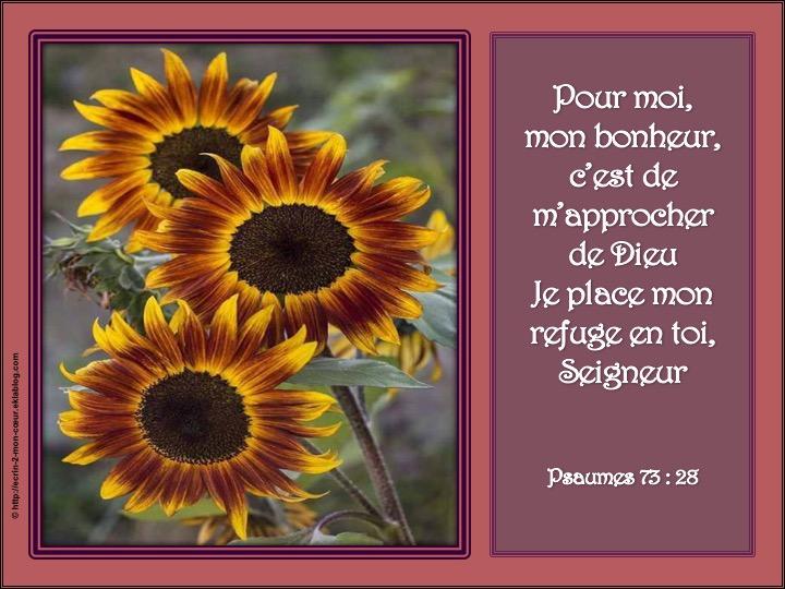 Mon bonheur et mon refuge sont en Dieu - Psaumes 73 : 28
