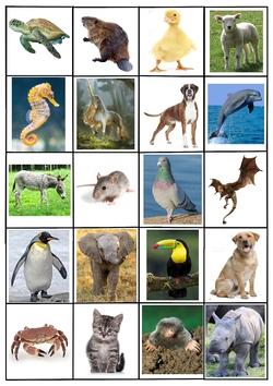 Associer doudous et vrais animaux