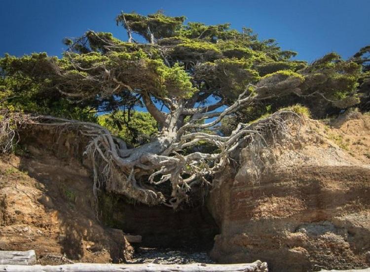 Images du monde : Ces arbres qui s'obstinent à vivre