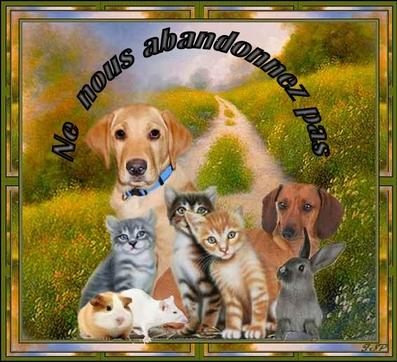 Nos amis les animaux. ..