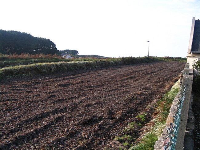 L'Ile de Batz et sa pomme de terre primeur ... !!!