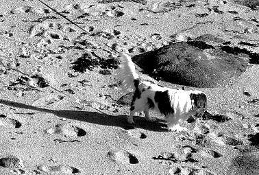 On a marché sur la plage...