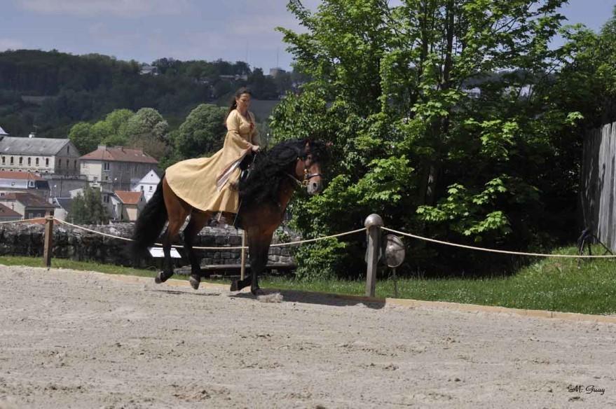 cheval-cavaliere-3811.jpg