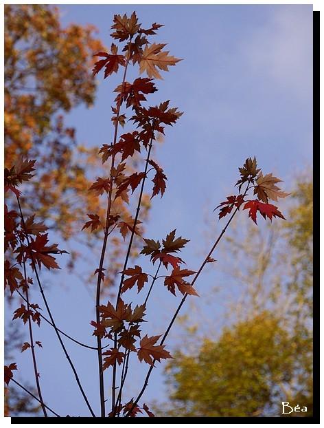 Le parc en automne