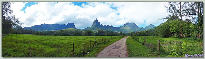 Mont Mouaroa (880 m) - Moorea - Polynésie française