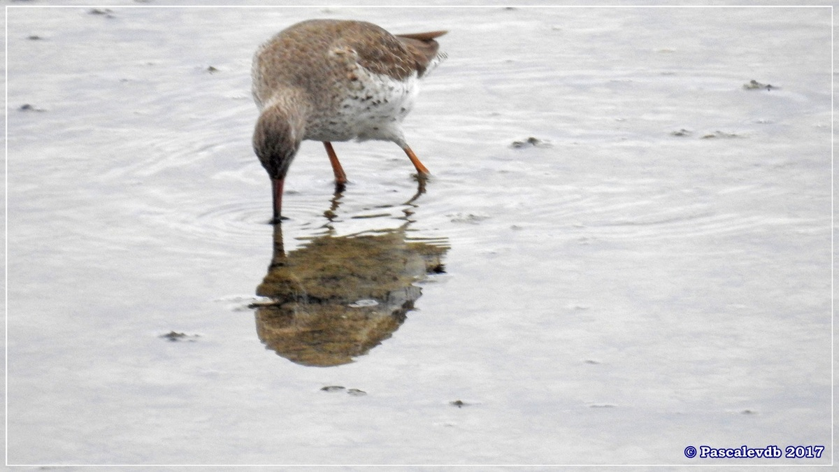 Réserve ornitho du Teich - Mars 2017 - 6/15