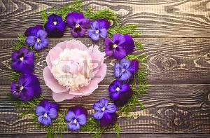 Violettes sur fond en bois. Espace de copie Banque d'images