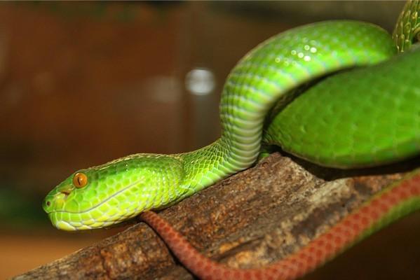 serpent (6)