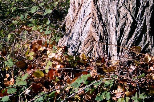 Ecorce d'un arbre en automne