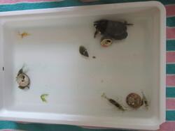 Un après-midi formidable avec les animaux marins!