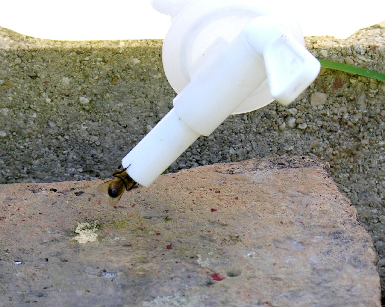 point d'eau pour abeilles