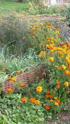 """""""Le Jardin Sauvage"""""""