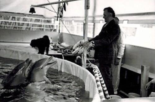 Jean Richard et ses dauphins au zoo d'Ermonville en 1969